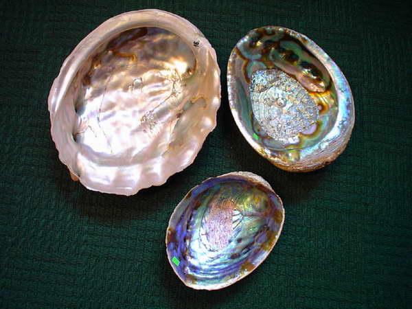 """Haliotisy noszą różne nazwy regionalne. We Włoszech nazywa się je """"uchem św.Piotra"""", we Francji - """"omer"""", w Japonii - """"awabi"""", a w Stanach Zjednoczonych - """"abalon"""". Abalony to także nazwa potrawy /w formie mielonych kotletów/, wyrabianej z mięsistej nogi haliotisów."""