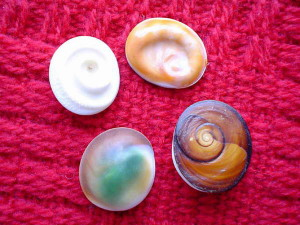 Operkulum, czyli wieczka ślimaków. Zwierzęciu służą do zamykania ujścia muszli, człowiekowi - jako półprodukt do wyrobu ozdób.