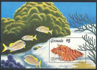 """Grenada, 1989. Rafa koralowa a na niej """"włochaty"""" tryton...z rodzaju Cymatidae."""
