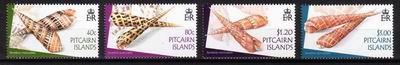 Terebry z Wysp Pitcairn.
