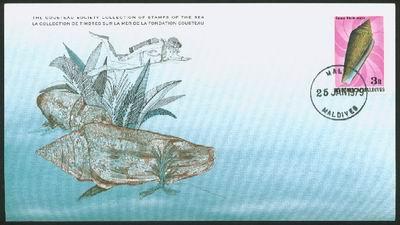 Malediwy, 1979. Stożek legenda - Conus gloriamaris.