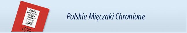 mieczaki12