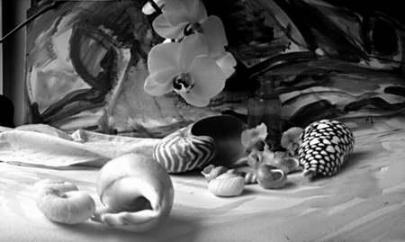 Ulubione eksponaty Willema...muszle i orchidee...