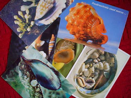 Pocztówkowe wspomnienia z muszlami przypominają wspaniałe letnie dni...słońce, plażę i morską bryzę.