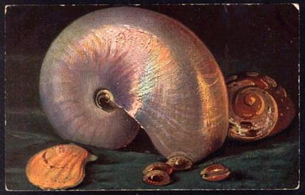 Martwa natura z nautilusem w roli głównej na holenderskiej pocztówce z 1921 roku.