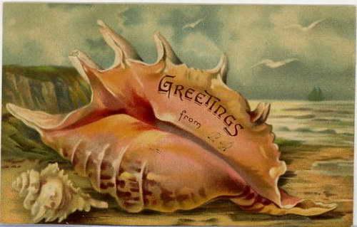 Efektowny Lambis i niepozorny rozkolec na amerykańskiej kartce z 1908 roku.